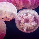 Le meduse e i bambini